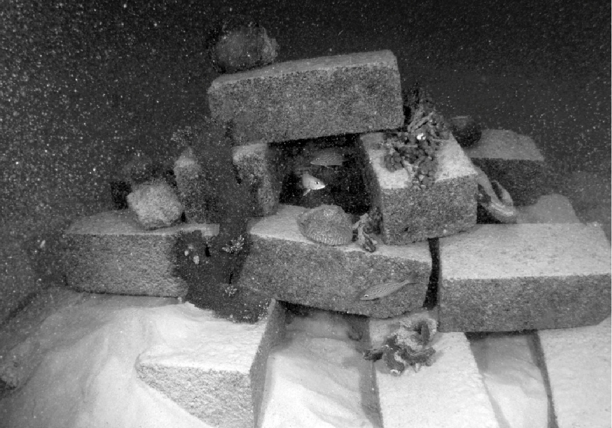 Figure 5-1: A cinder block reef with live coral. (Photo: Barry Brown)