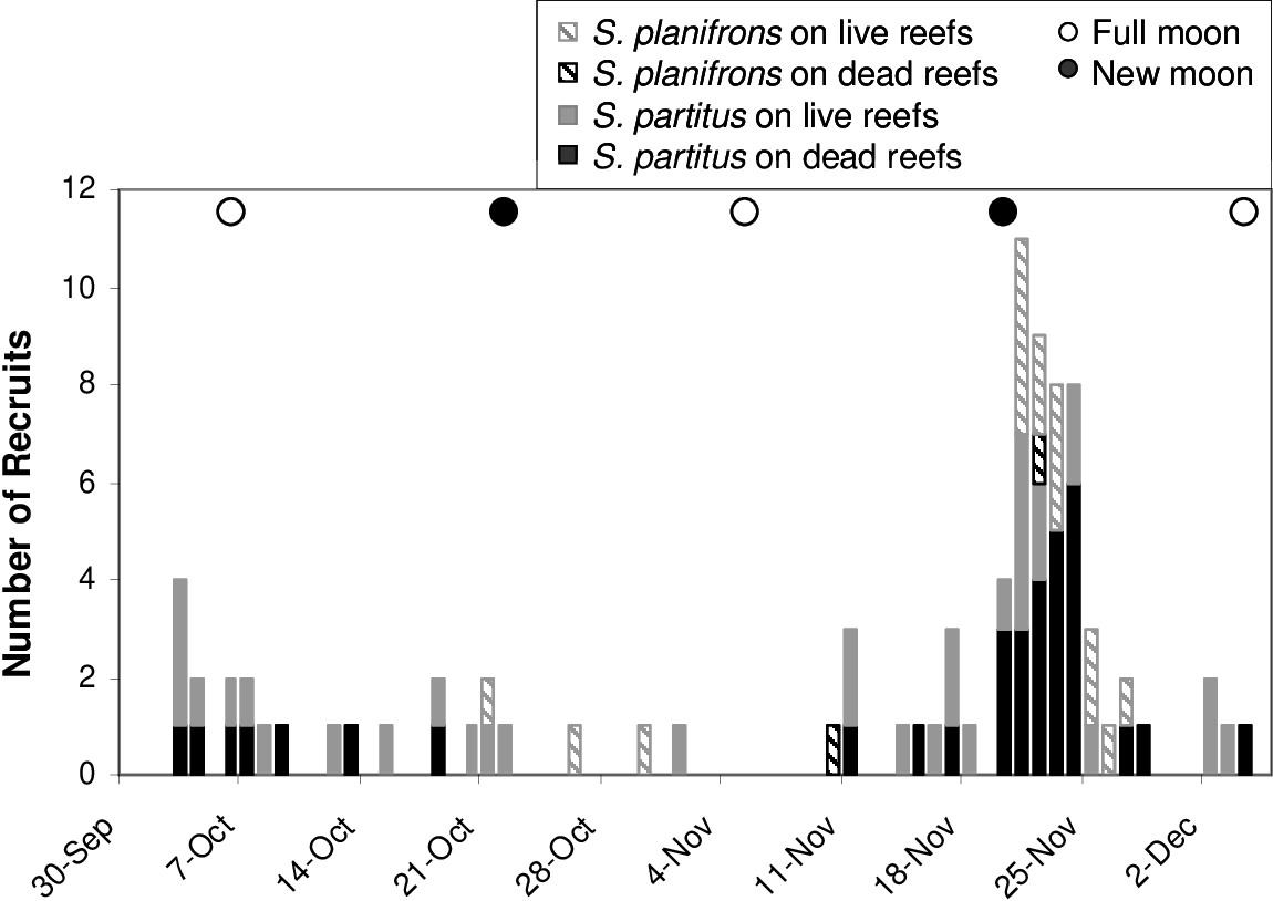 Figure 5-4:: Recruitment patterns of Stegastes partitus and Stegastes planifrons. Bars represent the daily sum of all recruits on all reefs of each treatment.