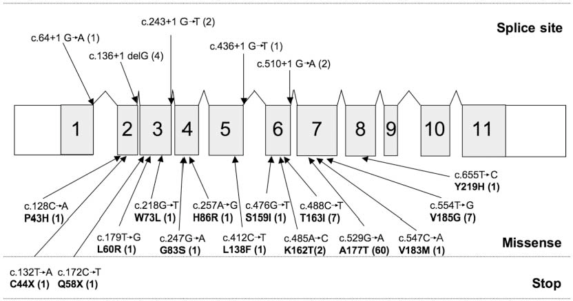 Figure 3. Schematic representation of the RNASEH2B gene, with the position of identified mutations. Shaded areas with large numbers indicate the specified exons. Numbers in parentheses after mutations represent the number of mutated alleles identified. Splice-site variants and stop mutations always occur with a missense mutation.
