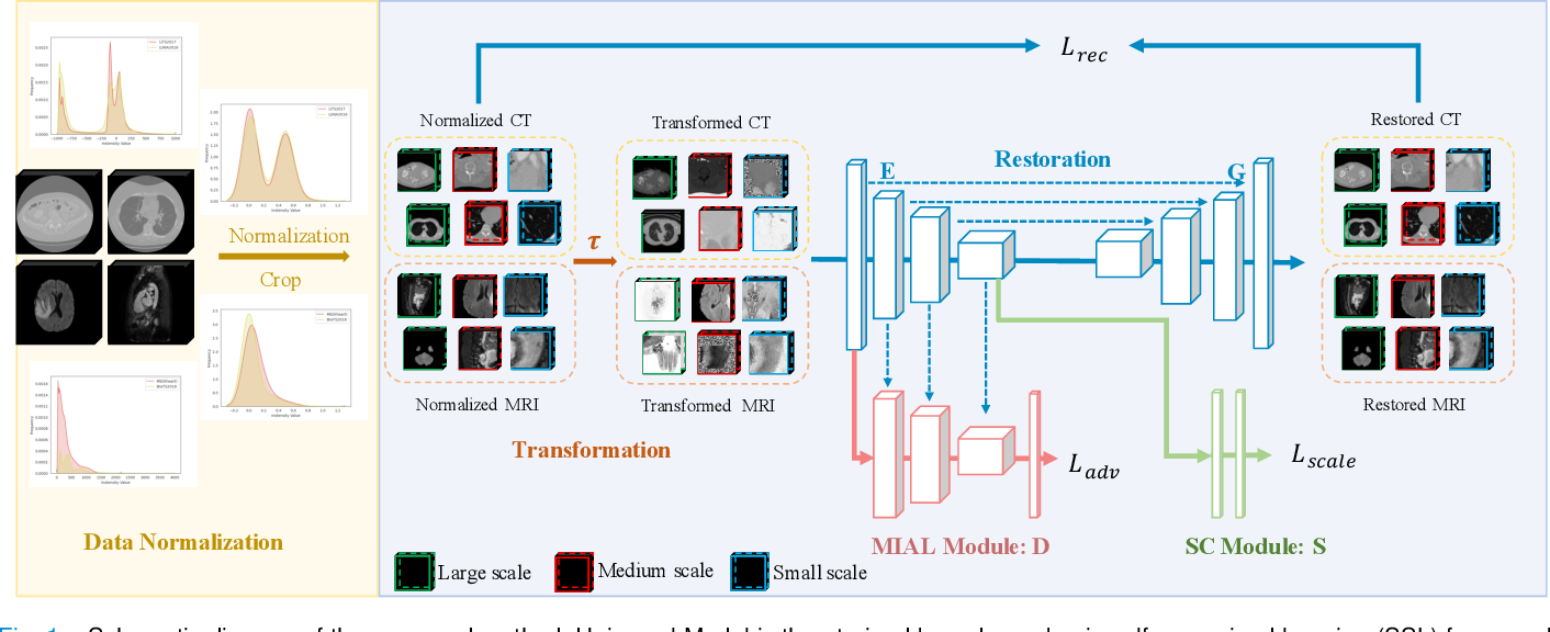 Figure 1 for Universal Model for 3D Medical Image Analysis