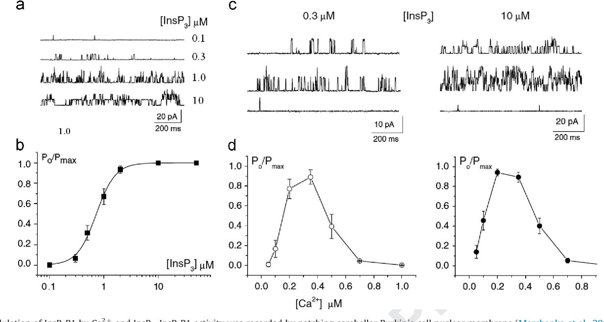 Fig. 2. Modulation of InsP3R1 by Ca2þ and InsP3. InsP3R1 activity was recorded by patching cerebellar Purkinje cell nuclear membrane (Marchenko et al., 2005) (a) InsP3R channel activity at different InsP3 concentrations. (b) Dependence of the normalized open probability of InsP3R channels on InsP3 concentration. Data points represent mean7SEM of five experiments. The solid curve is the Hill equation fit with EC50¼0.68 μM and Hill coefficient¼2.5. The channel activity (c) and normalized open probability of InsP3R channels (d) at different Ca2þ concentrations in the presence of low (0.3 μM, left; n¼5) and saturated (10 μM, right; n¼7) InsP3 concentrations. At both InsP3 concentrations 1 μM of Ca2þ almost completely inhibited the channel activity. Patch pipettes were filled with BaCl2 solution, bath contained standard KCl solution with [Ca2þ]i¼250 nM. Holding potential was 40 mV.