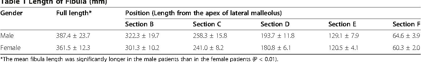 apex of fibula