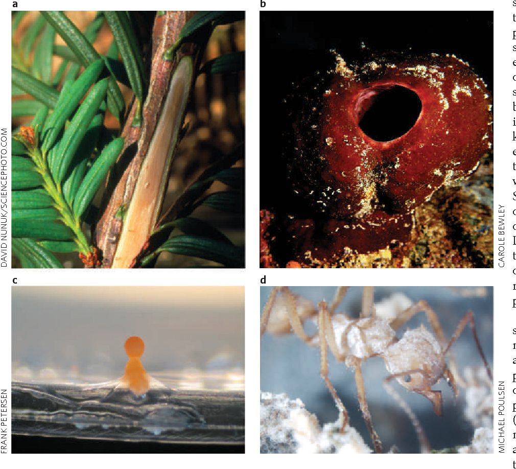 Figure 1 Sources of bioactive natural