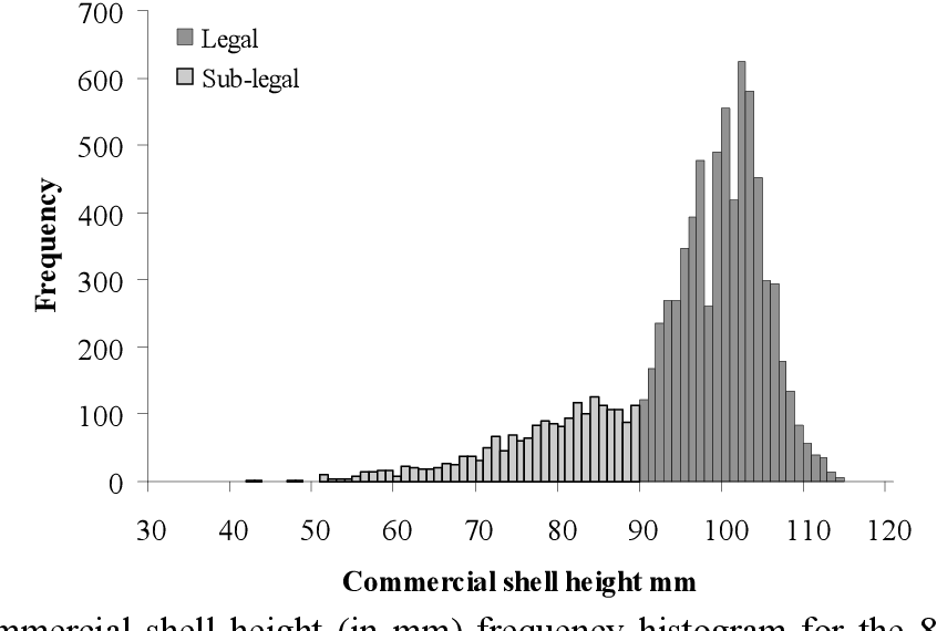 Figure 6-6: Commercial shell height (in mm) frequency histogram for the 8,868 A. balloti caught during the four survival experiments.
