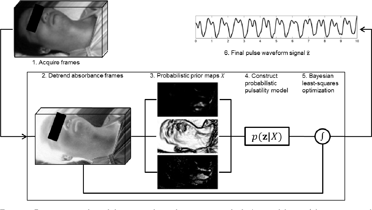 Figure 1 for A spectral-spatial fusion model for robust blood pulse waveform extraction in photoplethysmographic imaging