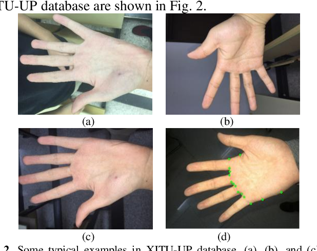 Figure 2 for Towards Efficient Unconstrained Palmprint Recognition via Deep Distillation Hashing