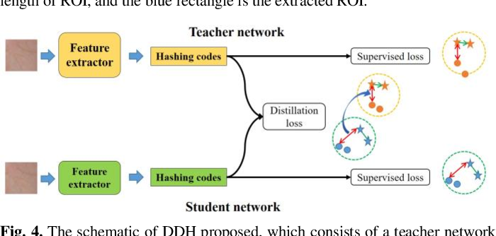 Figure 4 for Towards Efficient Unconstrained Palmprint Recognition via Deep Distillation Hashing