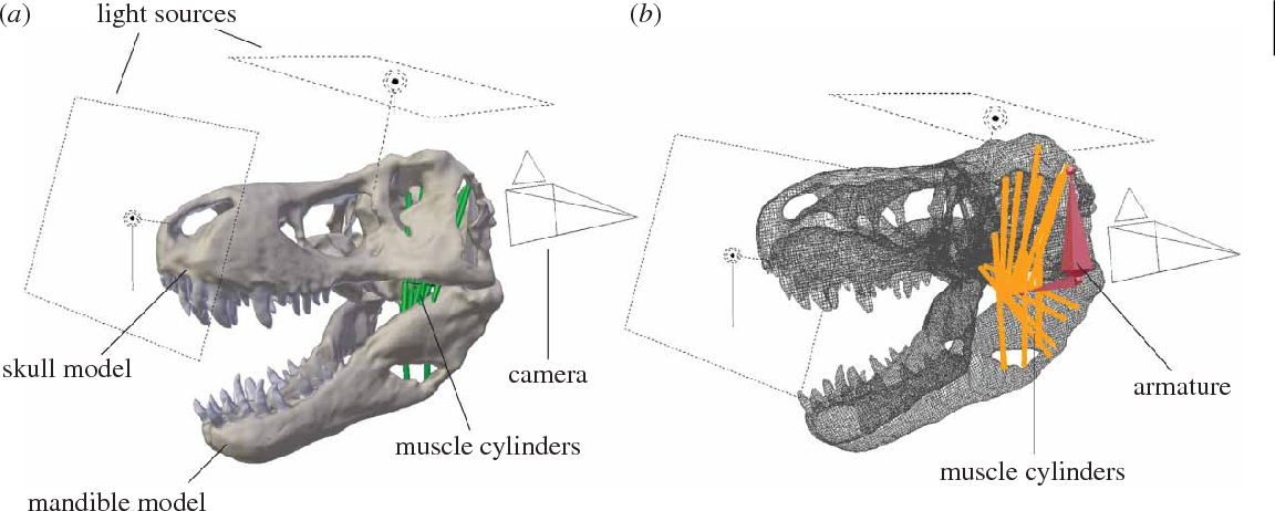 Figure 2 from Estimating cranial musculoskeletal constraints
