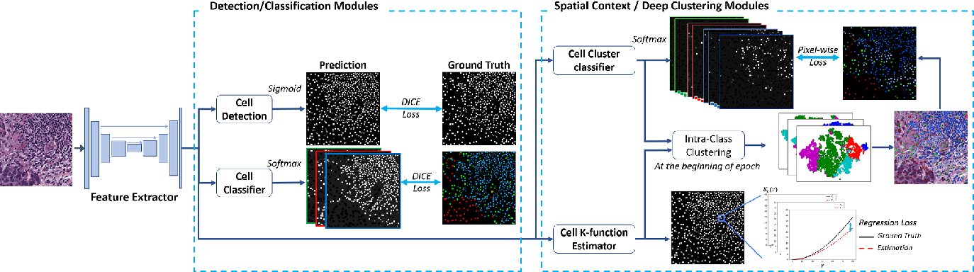 Figure 3 for Multi-Class Cell Detection Using Spatial Context Representation