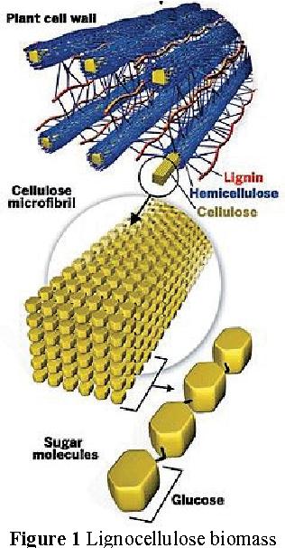 Figure 1 Lignocellulose biomass