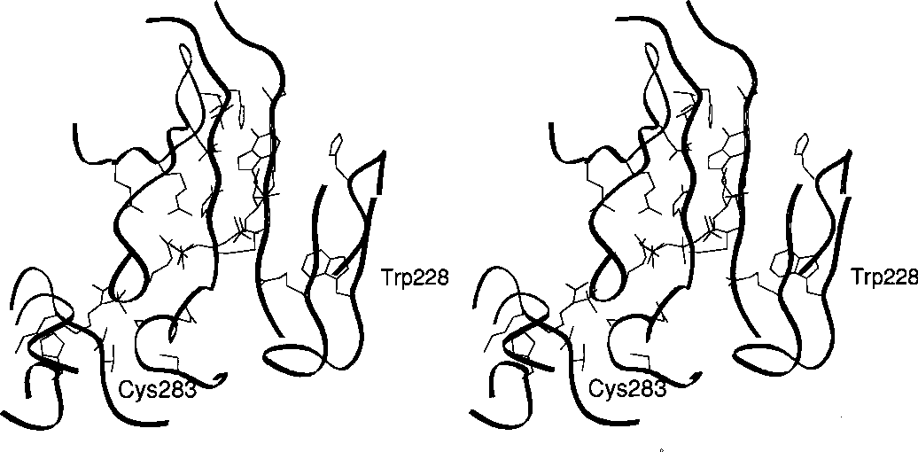 Figure 3 From Crystal Structure Of Rabbit Muscle Creatine Kinase