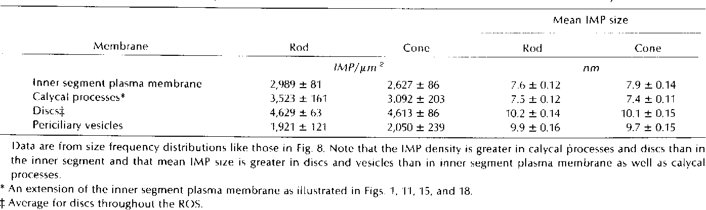 TABLE II Comparison of Mean Density and Size of IMP in the PF Leaflet of Membranes of Rod and Cone Photoreceptors