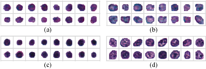 Figure 4 for Unsupervised Learning for Cell-level Visual Representation in Histopathology Images with Generative Adversarial Networks