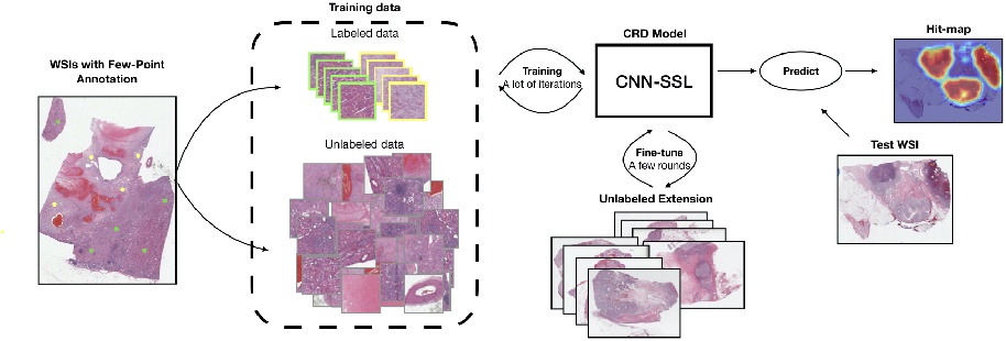 Figure 3 for Renal Cell Carcinoma Detection and Subtyping with Minimal Point-Based Annotation in Whole-Slide Images