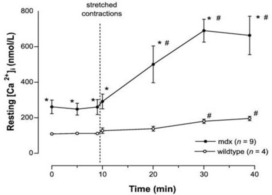 The Effect Of Taurine On Dystrophic Muscle Tissue Function