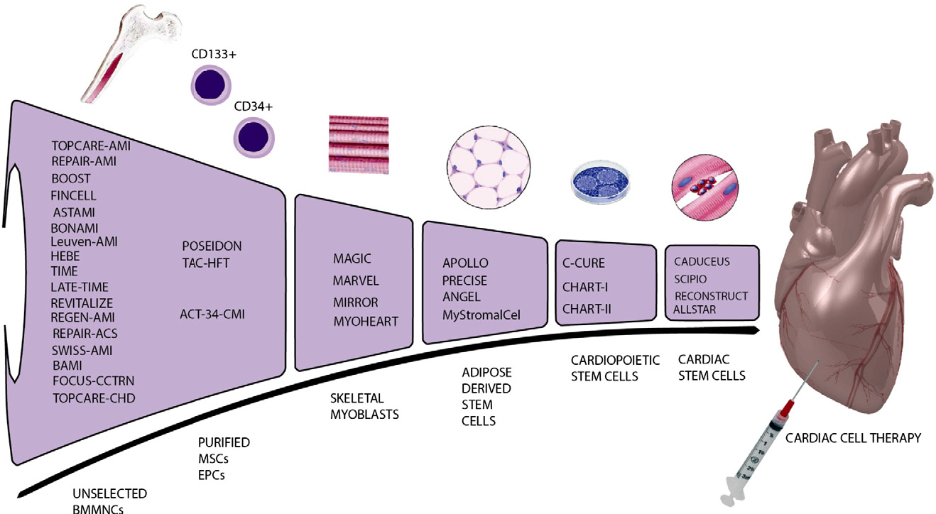 Figure 1 From Drug And Cell Delivery For Cardiac Regeneration