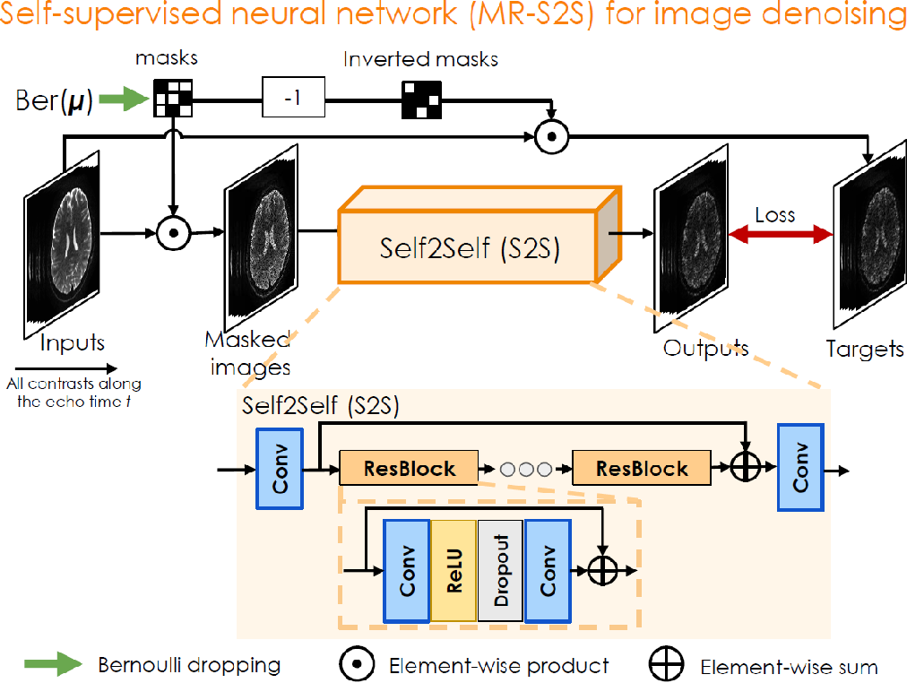 Figure 2 for BUDA-SAGE with self-supervised denoising enables fast, distortion-free, high-resolution T2, T2*, para- and dia-magnetic susceptibility mapping