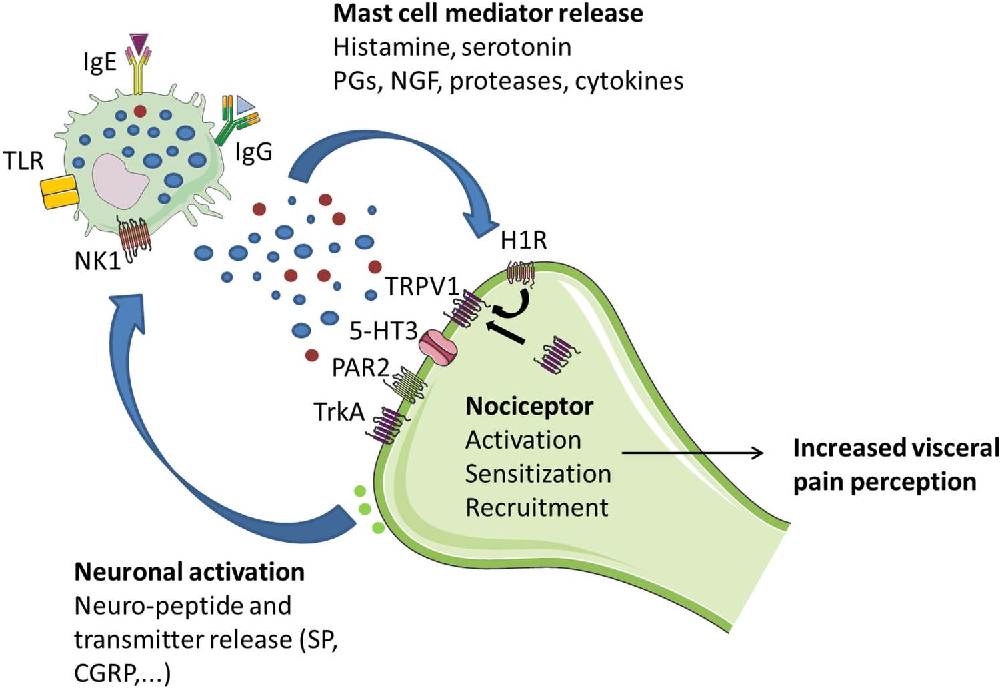 Figure 3 from The role of mast cells in functional GI disorders