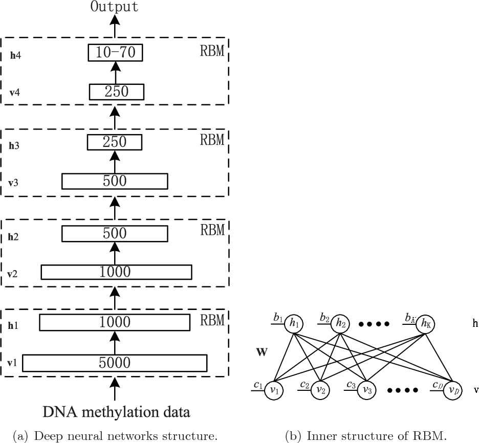 Figure 1 for Deep Neural Network for Analysis of DNA Methylation Data