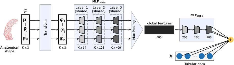 Figure 1 for A Wide and Deep Neural Network for Survival Analysis from Anatomical Shape and Tabular Clinical Data