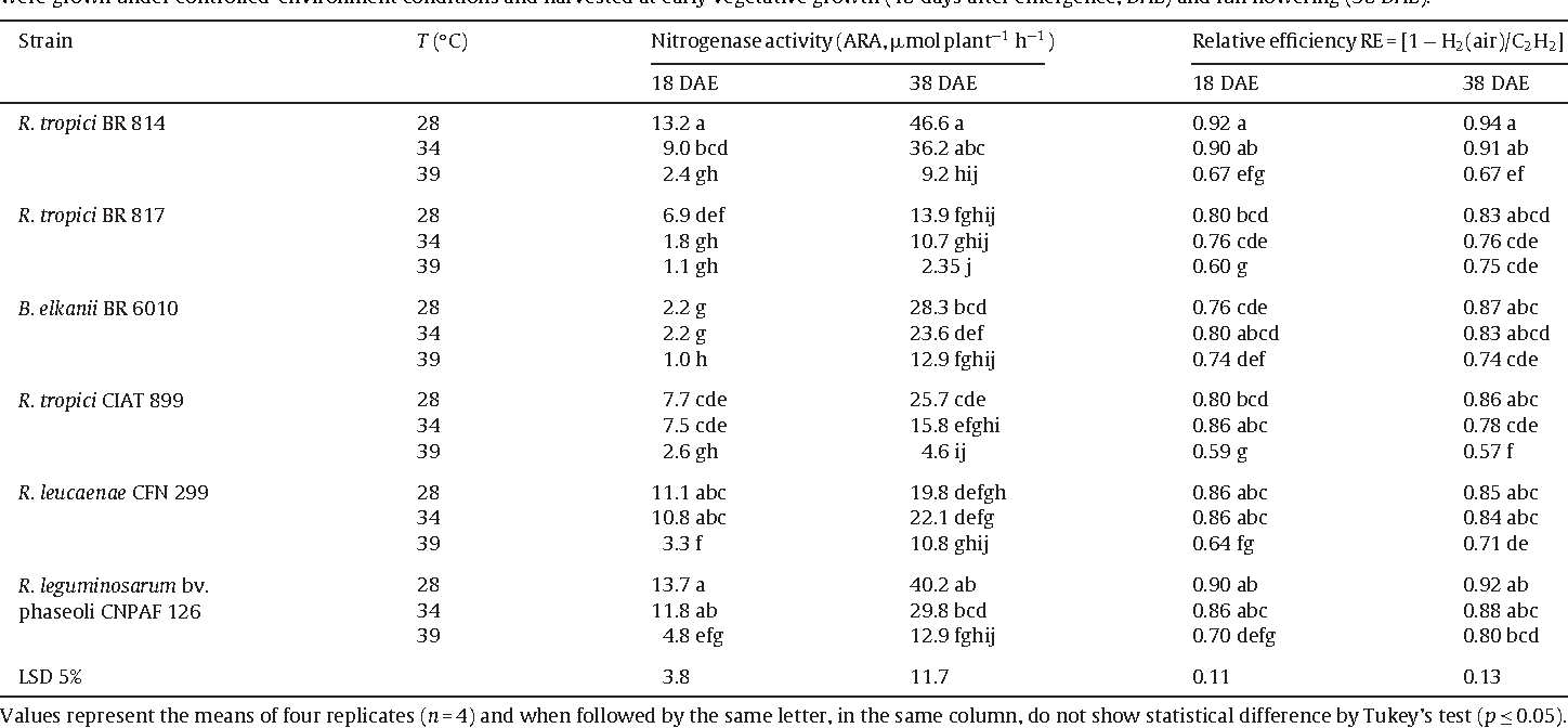 Table 1 Temperature effects on nitrogenase activity and relative efficiency in nodules of Phaseolus vulgaris L. cv. Negro Argel associated with six different rhizobial strains. Plants were grown under controlled-environment conditions and harvested at early vegetative growth (18 days after emergence, DAE) and full flowering (38 DAE).
