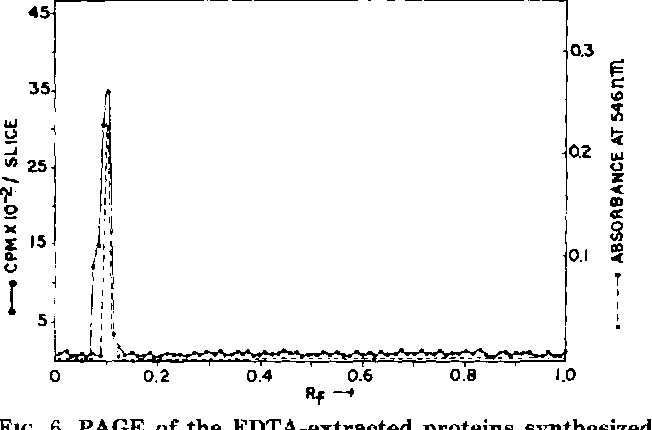 FIG. 6. PAGE of the EDTA-extracted proteins synthesized in vitro in the chloroplasts of Sorghum by endogenous templates or preincubated chloroplasts primed with Sorghum whole cell or chloroplast RNAs which had been prepared.
