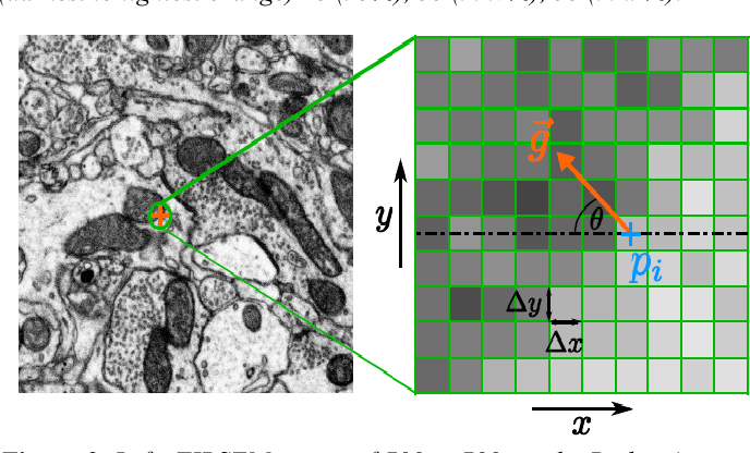 Figure 2 for Estimation of Z-Thickness and XY-Anisotropy of Electron Microscopy Images using Gaussian Processes