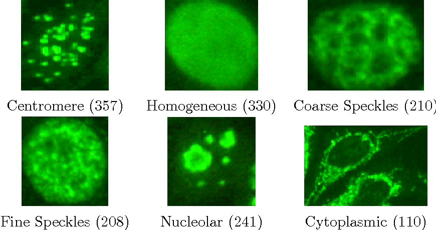 Figure 1: Example of cell images from the ICPR 2012 Cell Classification Contest. The number of cells per class is indicated within the parentheses.