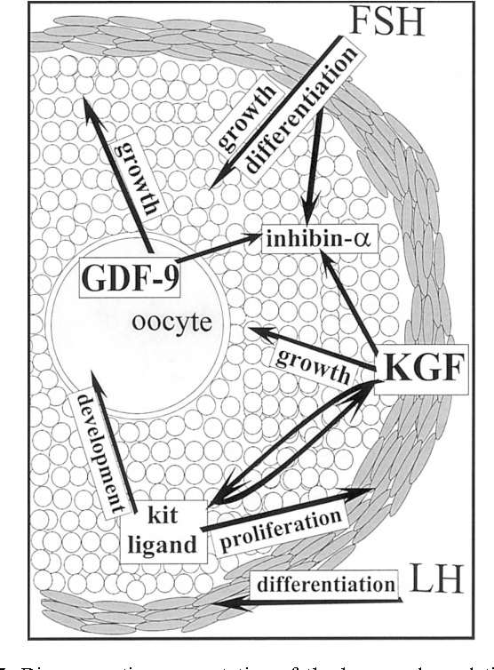 Hormonal Regulation Of Early Follicle Development In The Rat Ovary