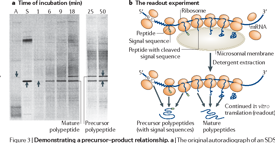 5 Figure3 1 spatial expression of the genome the signal hypothesis at forty