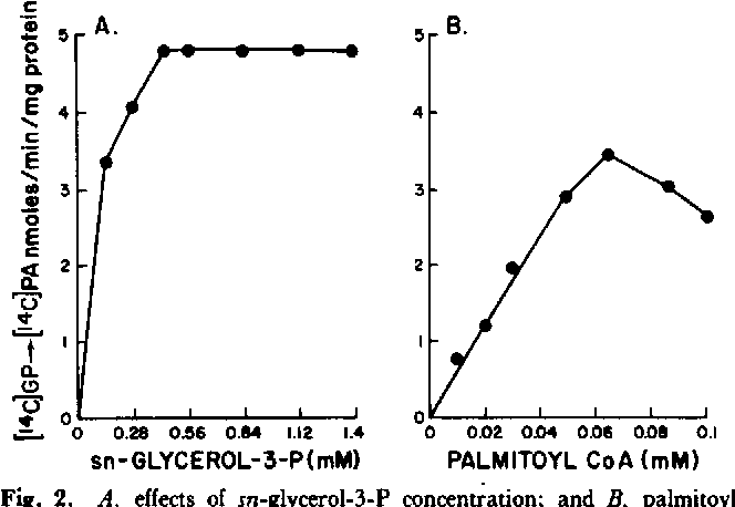 Fig. 2. A, effects of m-glycerol-3-P concentration; and B, palmitoyl CoA concentration on phosphatidate formation. Experimental conditions were the same as described in Methods. GP, glycerophosphate; PA, phosphatidate.