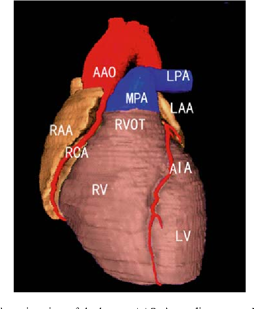 Thin sectional anatomy, three-dimensional reconstruction and ...