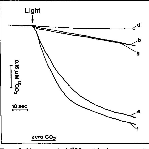 Figure 2 From Active Co2 Transport By The Green Alga Chlamydomonas