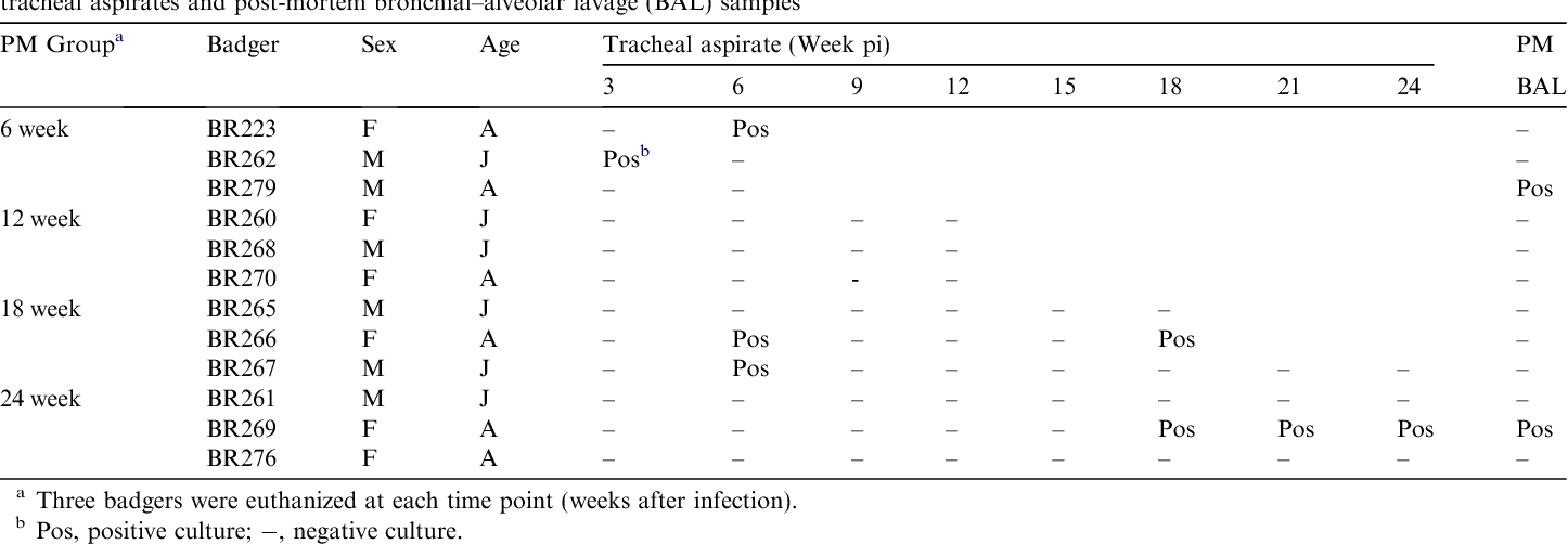 Table 1 Experimental infection of badgers by endobronchial inoculation of 2.5 104 colony forming units of Mycobacterium bovis: cultural examination of tracheal aspirates and post-mortem bronchial–alveolar lavage (BAL) samples