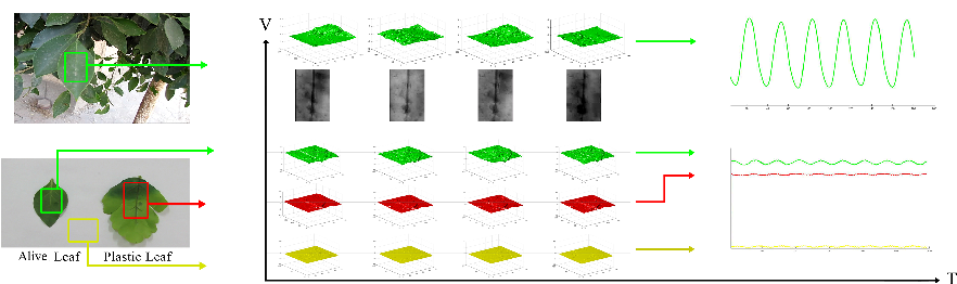 Figure 1 for Can We See Photosynthesis? Magnifying the Tiny Color Changes of Plant Green Leaves Using Eulerian Video Magnification