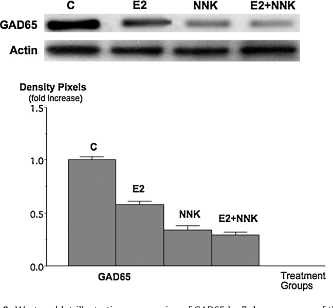Fig. 6. Western blot illustrating suppression of GAD65 by 7 days exposure of the cells to NNK (1nM), estrogen (100nM) or the combination of both. Columns in the