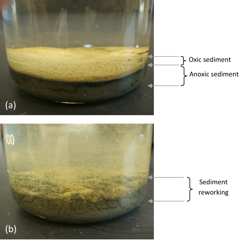 PDF] Influence of tubificid worms on nutrient fluxes across