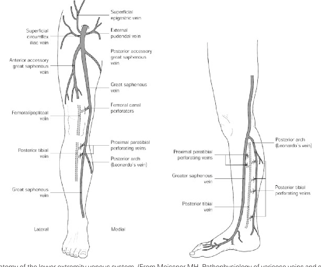 Figure 1 from Lower extremity venous anatomy. - Semantic Scholar