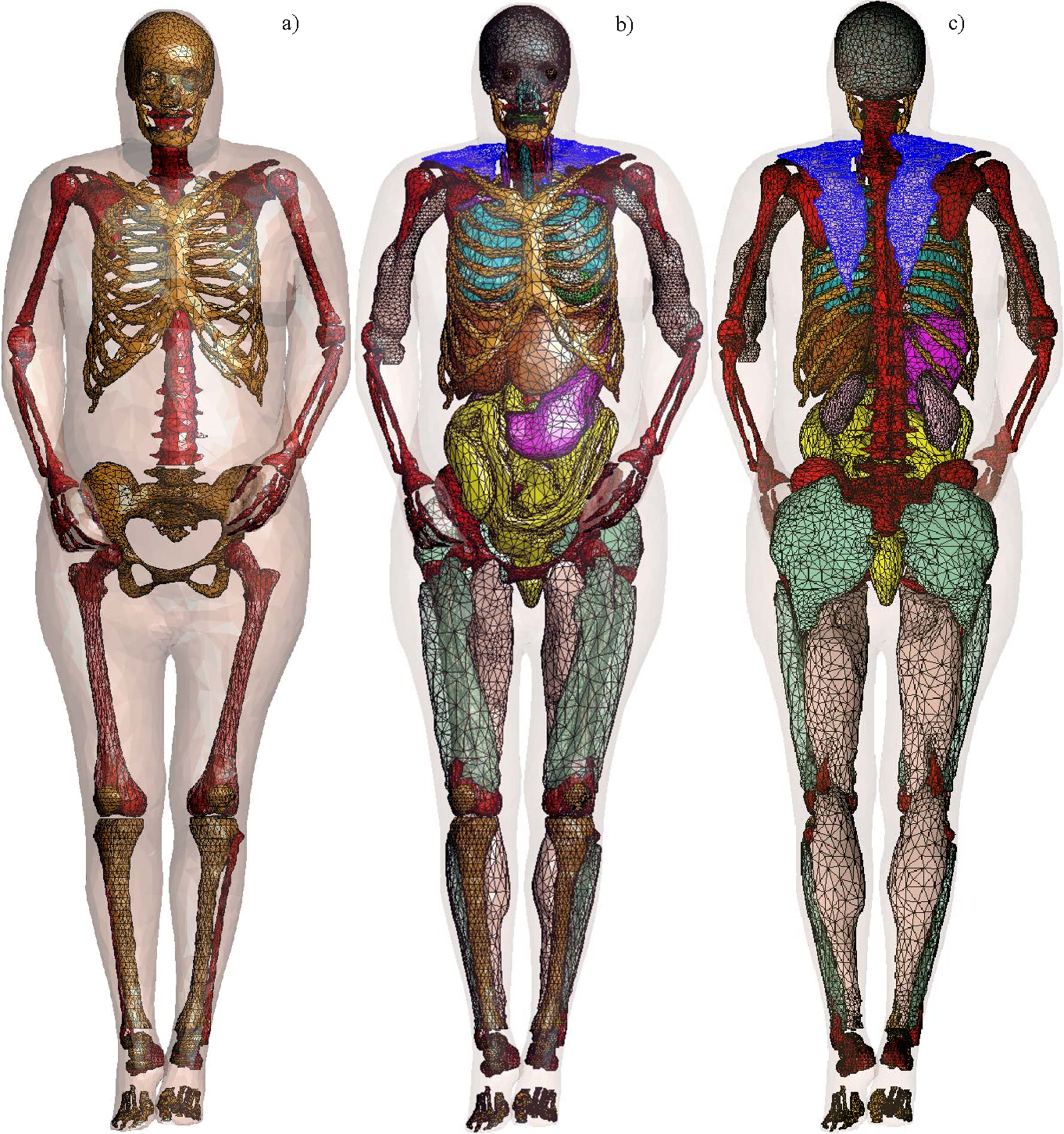 Figure 3 from Full-body visible human project® female computational