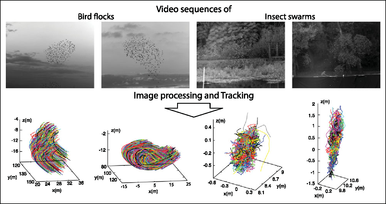 Figure 1 for GReTA - a novel Global and Recursive Tracking Algorithm in three dimensions