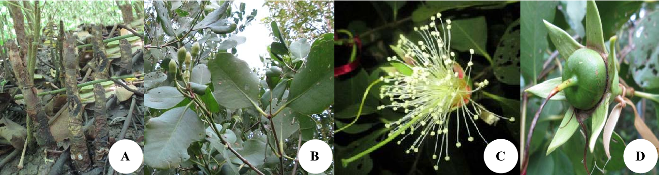 Figure 3 from Short Communication: The phenology of