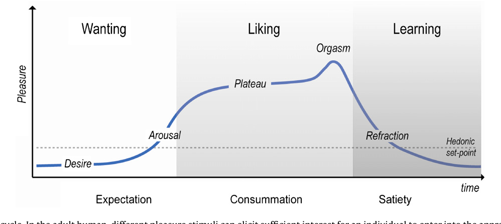 Figure 1 From The Human Sexual Response Cycle Brain -8611