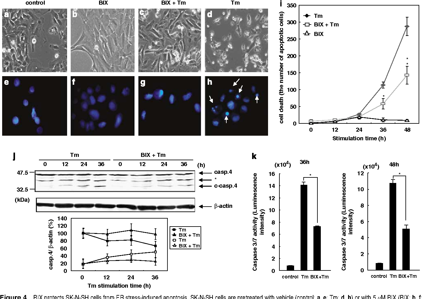 Figure 4 from A molecular chaperone inducer protects neurons from ER