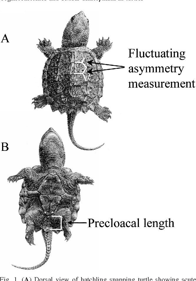 Snapping turtle sex hormones