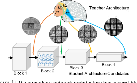 Figure 1 for Blockwisely Supervised Neural Architecture Search with Knowledge Distillation