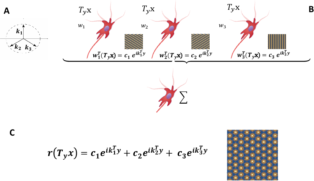 Figure 2 for A computational model for grid maps in neural populations