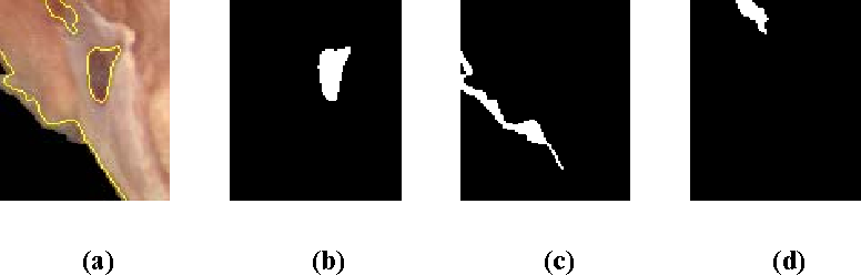 Figure 12. The result of the snake routine on a clip of chicken part image. (a) Final contour (b) A fan bone region (c) An edge region (d) A shadow region.