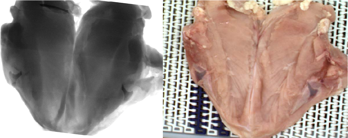Figure 18. X-ray (left) and color (right) images of a deboned poultry meat sample.
