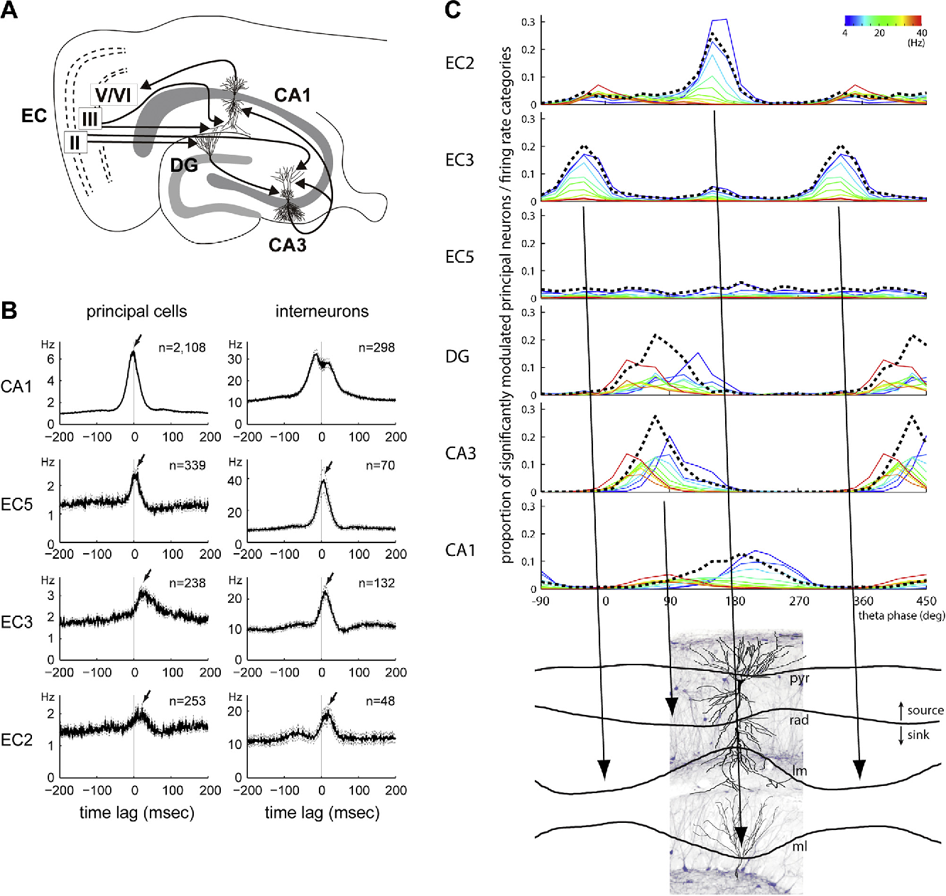 Hippocampal Information Processing Across Sleep Wake Cycles For Rafael Vasconcelos Some Wiring Diagrams Semantic Scholar