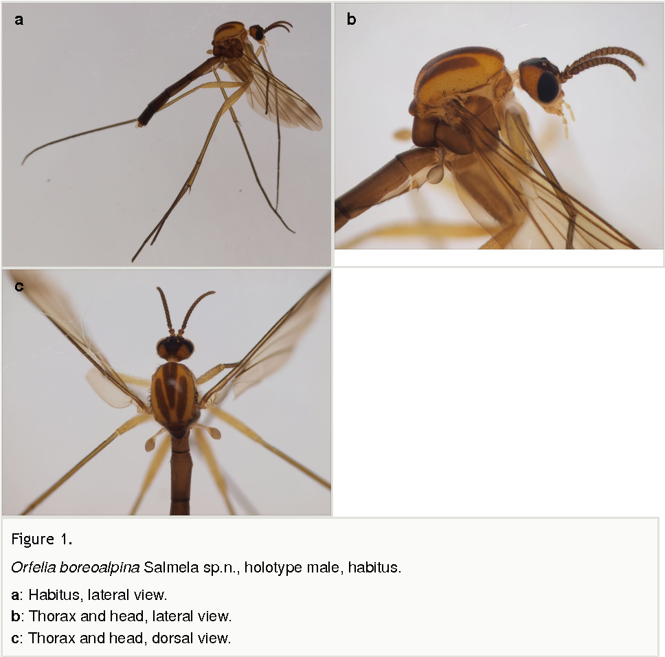 New and poorly known Palaearctic fungus gnats (Diptera, Sciaroidea ...